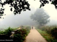 Panorami nella nebbia