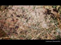 Vegetazione e ragni