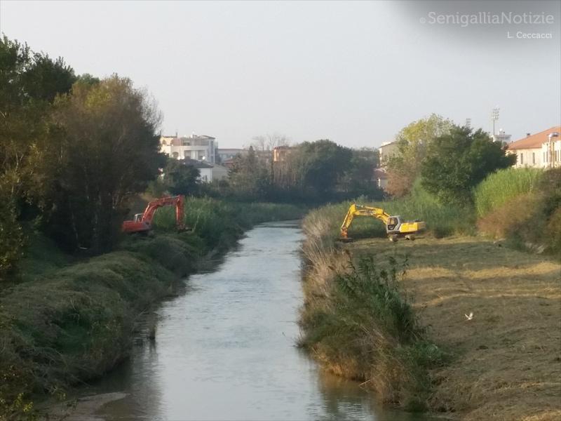 Ruspe al lavoro sul fiume Misa a Senigallia per la manutenzione