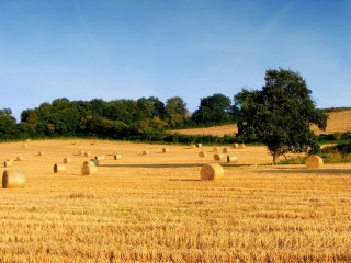 campo agricolo, agricoltura, campagna, aziende agricole