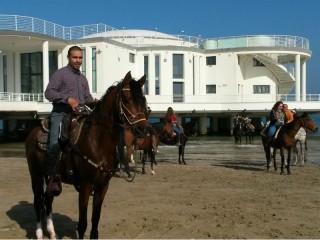 Un cavallo di fronte alla Rotonda