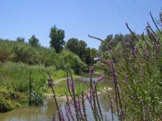 Uno scorcio del fiume Misa nell'entroterra