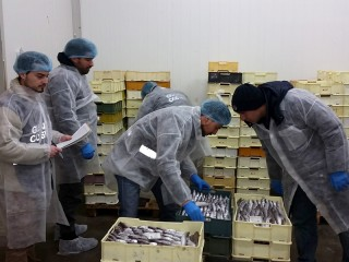 Controlli della Guardia Costiera di Ancona si prodotti ittici