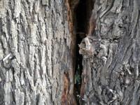 Una delle varie piante di tamerici rovinate sul lungomare Mameli di Senigallia