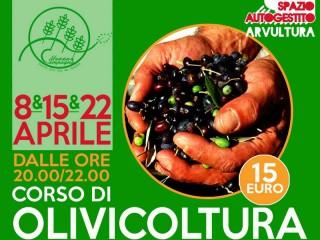 Corso di olivicoltura organizzato dal mercato bio Mezza Campagna