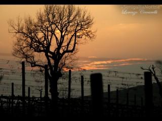 Una foto-giorno-lorenzo-ceccarelli