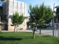 Gli alberi presso i giardini Catalani, a Senigallia