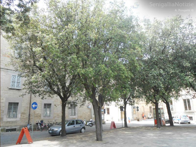 Alberi di Piazza Garibaldi