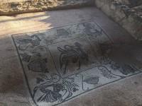 Uno dei musaici finalmente fruibili al parco archeologico di Castelleone di Suasa