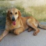Cani cercano padrone al canile di Ostra Vetere