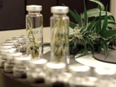 cannabis terapeutica, tilizzo della cannabis a fini terapeutici, farmaci cannabinoidi