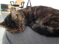 La gattina trovata a Senigallia