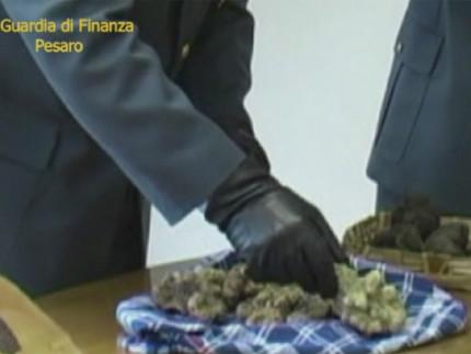 Blitz della Guardia di Finanza del comando provinciale di Pesaro sui finti acquisti di veri tartufi