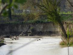 Un tratto dell'argine del fiume Misa, a Senigallia, dove si può notare la sponda con un'importante erosione dovuta alle piene del fiume