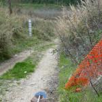 Fiume Misa: ripulito un tratto dalla vegetazione e riportata alla luce un'asta per il monitoraggio dell'innalzamento del fiume