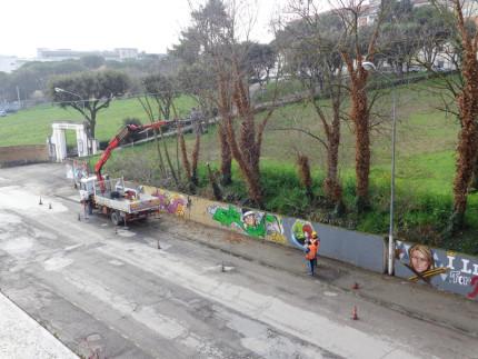 La potatura degli alberi in via Cellini, marzo 2016