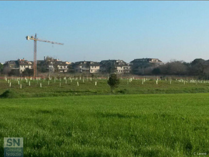 Parco della Cesanella