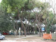 Area verde nei pressi della stazione