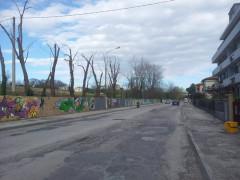 La potatura degli alberi in via Cellini