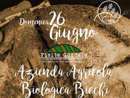 Mezza Campagna: visita guidata all'azienda agricola Bicchi