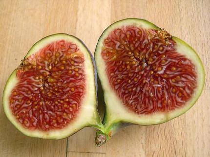 """Il """"falso frutto"""" del fico"""