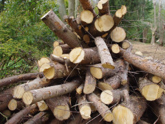 legna, legname, alberi abbattuti