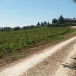 Nuovi percorsi ciclopedonali realizzati a Corinaldo: oltre 18 km in quattro percorsi ad anello che toccano le frazioni Ville, Sant'Apollonia, Nevola, Madonna del Piano