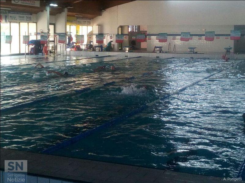 La piscina saline di senigallia compie 12 anni senigallia notizie senigallia notizie - Piscina di venaria ...