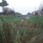 Il fosso della Giustizia a Senigallia, in parte ripulito dalla folta vegetazione
