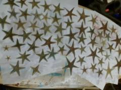 le stelle (di mare) 'cadono' sulla spiaggia di velluto