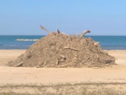 Emergenza spiaggiamenti: l'opposizione fa il suo mestiere