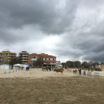 Cavalli in spiaggia a Senigallia