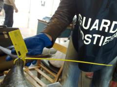 Pesca: controlli della Guardia Costiera