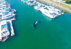 Una grande balena
