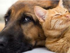 Animali domestici, cani, gatti
