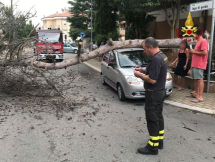 Albero caduto in via Lago di Garda. Intervento dei Vigili del Fuoco