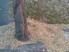 Senigallia, rifiuti urbani non raccolti a Roncitelli
