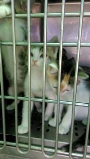 Gatti in gabbia al canile di Senigallia