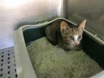 Uno dei gatti in gabbia al canile di Senigallia