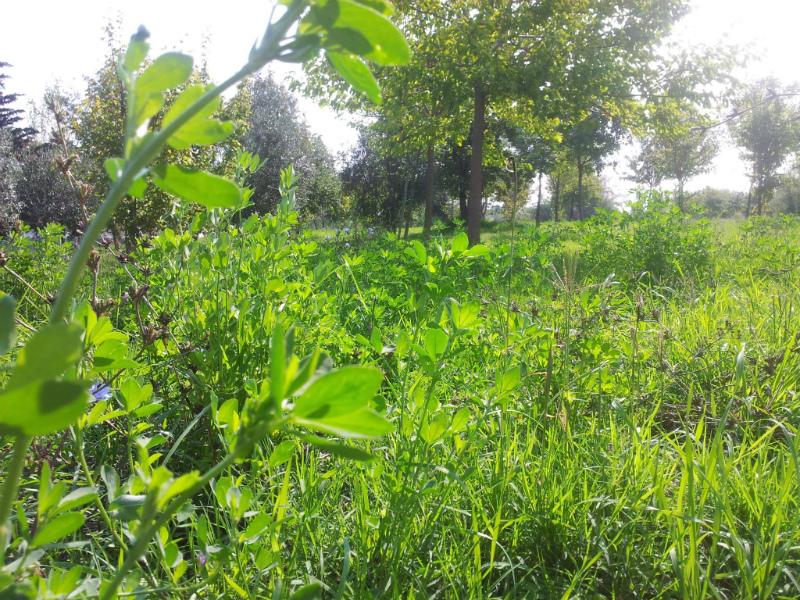 Il bosco di topolino della cesanella un altro esempio di - Oneri diversi dalla fornitura eni cosa sono ...
