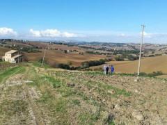 La linea elettrica danneggiata a Ostra, dove è morto folgorato il cane Bella