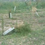 Situazioni di degrado degli alberi piantumati al parco delle Saline