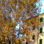 Alberi a Roncitelli