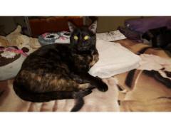 Gattina kitty
