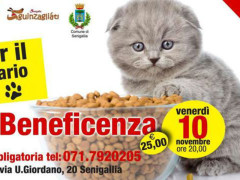 cena beneficenza gattile