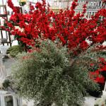 Piante ornamentali al vivaio Piantaviva di Senigallia