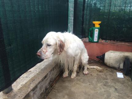 Il cane ripescato dentro il Misa a Senigallia