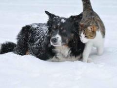 cani e gatti inverno