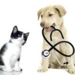 Cane e gatto prime cure
