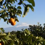 Gli aranceti e l'Etna, nei pressi di Palagonia (CT)